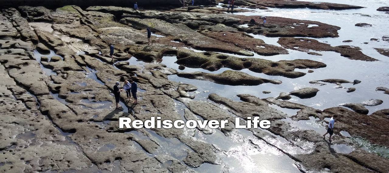 Rediscover Life